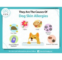 They Are The Causes Of Dog Skin Allergies